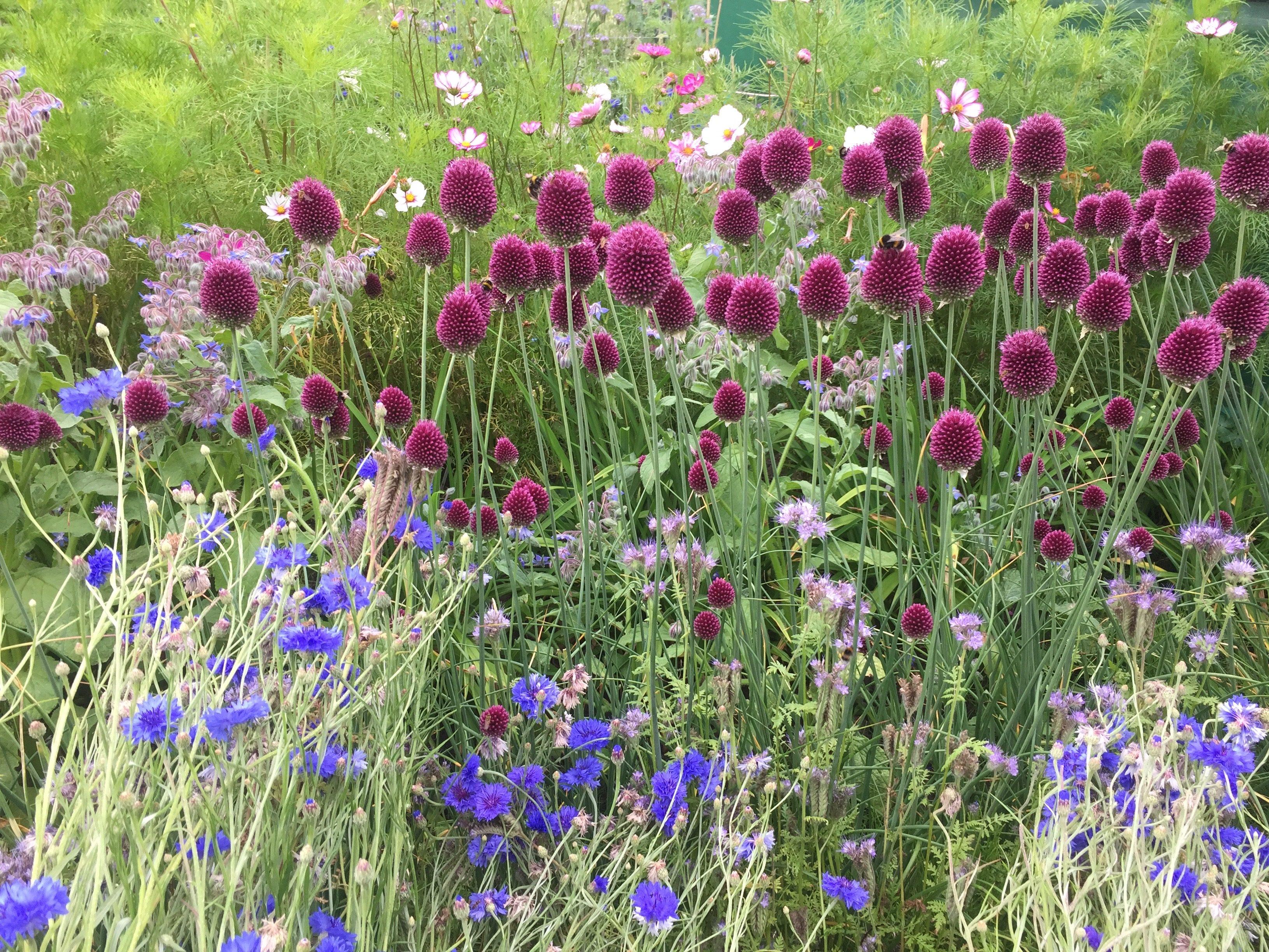 Meadow Farm Flowers